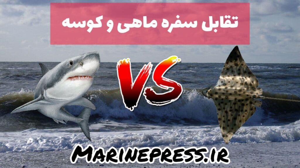 تقابل سفره ماهی و کوسه در سواحل خلیج فارس